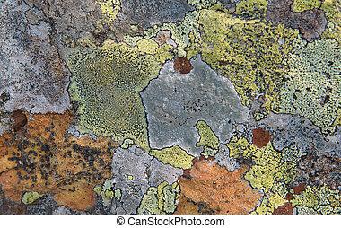 lichen on stone - Texture Of Multi-Colored Lichen On A Rock