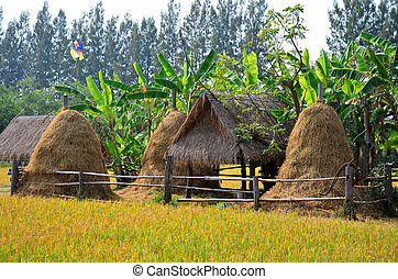 Rice field and straw hut at Jim Thompson Farm at Countryside...