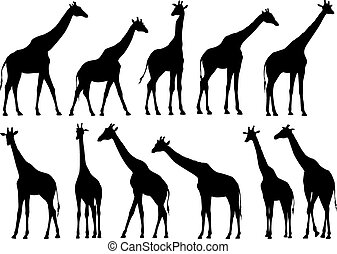 Set vector silhouettes of giraffes - Set vector silhouettes...