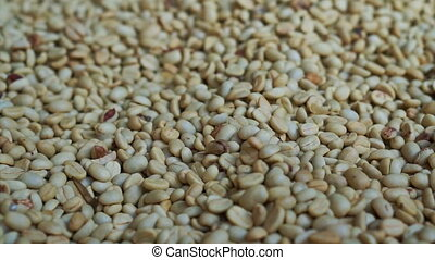 pile of green raw coffee bean - Video of green raw coffee...