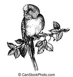 Illustration wavy parrot on brunch fo pet shop commercial -...