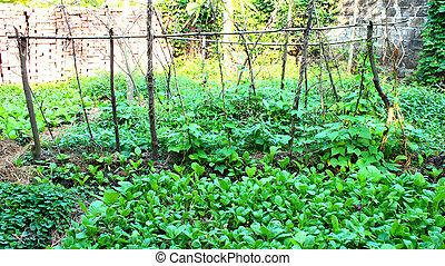 Vegetables in the garden