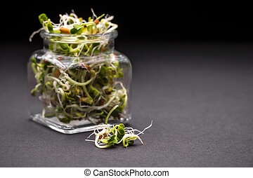 Sprouts  - Mix of fresh sprouts in glass jar