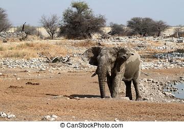 Elephants in the Etosha Park - Elephants in the Etosha...