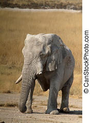 Elephants in the Etosha Park - Elephants in the Etosha...