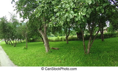 Fruit orchard Village - In mountainous Georgian village on...
