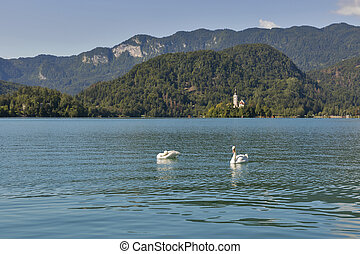 Pair of swans on the Lake Bled in Slovenia