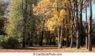 Beautiful autumn landscape - Falling yellow leaves Autumn...