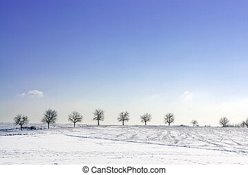 Trees in winter - A row of trees in snowy surroundings with...