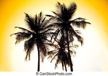 Palms. Tropical forest. Tayrona National Park. Colombia -...