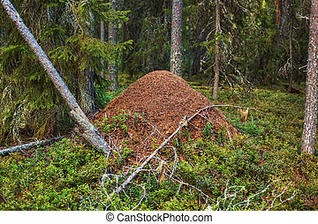 Big anthill in wild forest