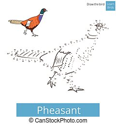 Pheasant bird learn to draw vector - Pheasant learn birds...