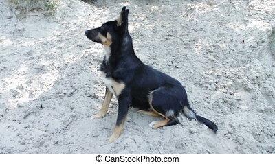 Funny dog on a sandy beach - Cheerful black a homeless dog...