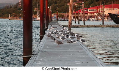 Flock Of Seagulls Dock Gold Beach - Seagulls Standing And...