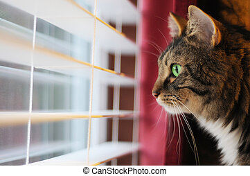 Cat Looking out window at day - Cat waiting for his master...