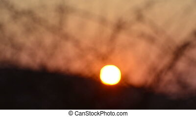 Africa Sunset Blur - African sunset through thorn trees...