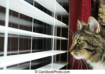 Cat Looking out window - Cat waiting for his master to get...