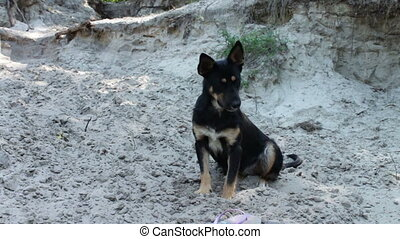 Funny dog on a sandy beach. - Cheerful black a homeless dog...