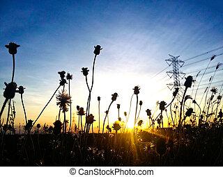 cielo, flor, silueta, ocaso, colorido