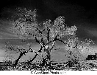 Dead Tree - burned tree in the desert