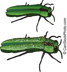 Emerald Ash Borer - The Emerald Ash Borer: Eating and...