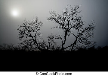 Creepy Fog Tree - Mesquite tree on a foggy Texas morning