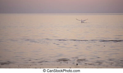 Bird Blurred Focus on Water - Pelican landing on water in...