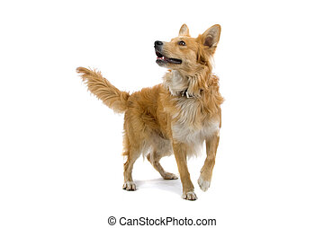 playful mixed breed dog isolated on a white background