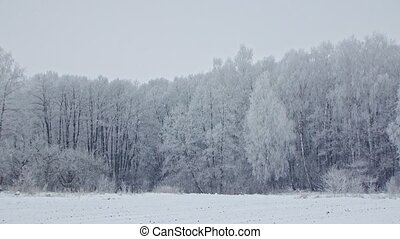 Mysterious Snowy Frosty Forest Winter Landscape - PAN SHOT...