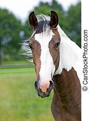 cabeza,  horse\\\'s