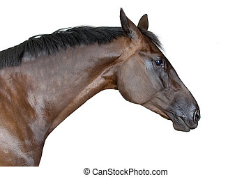 sideview of horse isolated on a white background