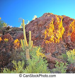 Sunrise in the Sonoran Desert - The sun rises and shines on...