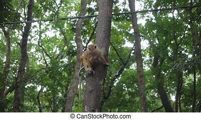 Monkey with child sitting on tree with telephone wire