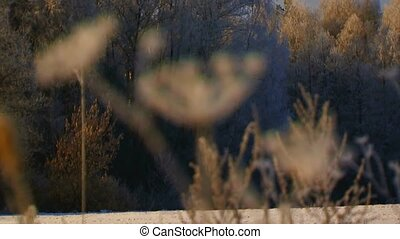 Frozen Grass In Winter Forest - Changing focus of beautiful...