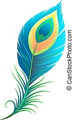 Peacock feather. Isolated illustration in vector format