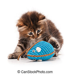 Cute siberian kitten with colored toy mouse isolated on...