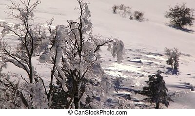 Frosted Bushes In Winter Forest - In the frame there are...
