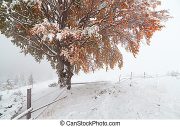 Two seasons - winter and autumn scene in the park.