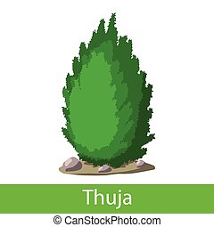 Thuja cartoon icon - Thuja icon. Single cartoon symbol on a...
