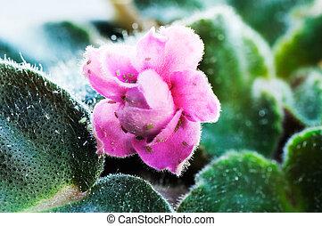 plante, pou, fond,  violet