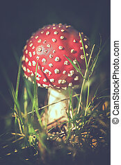 Fly agaric - tint - Fly agaric - toning - Amanita muscaria...