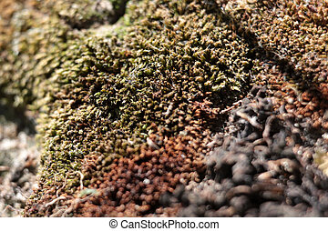 texture of the wood moss