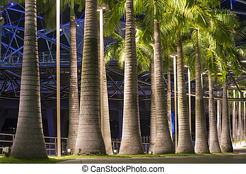 palm trees alley illuminated by night in Singapore city