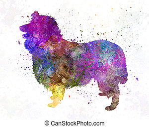 Collie in watercolor