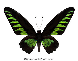 green butterfly Trogonoptera brookiana isolated on white...