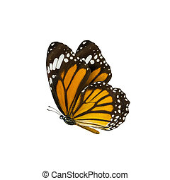 common tiger butterfly , Danaus Genutia , monarch butterfly...