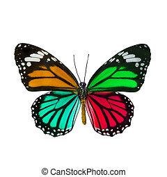 Colorful butterfly , Danaus Genutia , monarch butterfly...