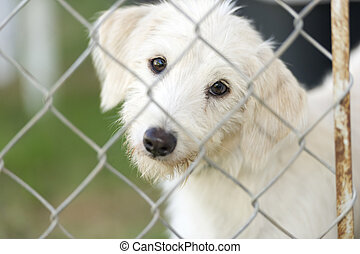 Shelter Dog - Shelter dog is cute dog in an animal shelter...