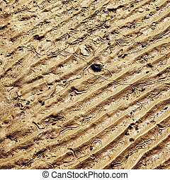 Seabed at Low Tide - textured seabed at low tide in Thailand