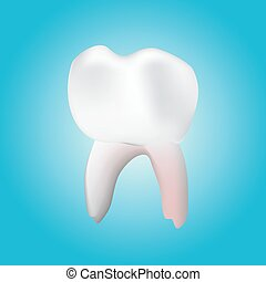 healthy molar tooth - a vector illustration of a 3-D healthy...